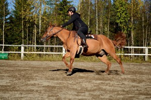2015sept_Åbyn_barrelRacing_Linda